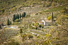 Tuscany. Landscape with vineyard and olives trees in the Chianti region, , Italy Royalty Free Stock Photos