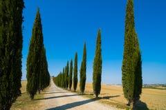 Tuscany landskap av v?gen f?r cypresstr?d i Italien arkivbild