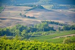 Tuscany landskap med gröna kullar och vingårdar fotografering för bildbyråer