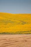 Tuscany landskap med solrosen Arkivbild