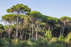 Tuscany lasu krajobraz fotografia stock
