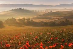 Tuscany liggande på soluppgången Typisk för det tuscan lantbrukarhemmet för region, kullar, vingård Italien nytt grönt tuscany la royaltyfri bild