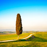 Tuscany, lonely cypress tree and rural road. Italy Royalty Free Stock Images