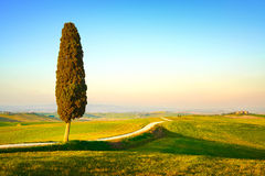 Tuscany, lonely cypress tree and rural road. Italy. Tuscany, lonely cypress tree and white rural road on sunset. Siena, Orcia Valley, Italy, Europe stock image