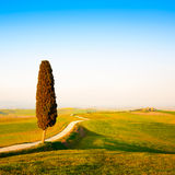 Tuscany, lonely cypress tree and rural road. Siena, Orcia Valley Royalty Free Stock Images