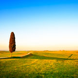Tuscany, lonely cypress tree. Siena, Orcia valley Stock Photos