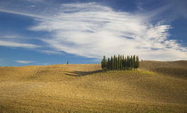 Tuscany. A lonely stand of trees pop up in the rolling landscape of Tuscany, Italy stock photos