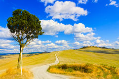 Tuscany, lonely tree and rural road. Siena, Orcia Valley, Italy. Royalty Free Stock Images