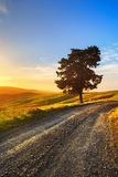 Tuscany, lonely tree and rural road on sunset. Volterra, Italy. Royalty Free Stock Images