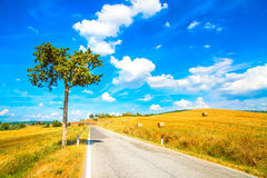 Tuscany, lonely tree and straight road. Siena, Val d Orcia, Italy. Stock Image
