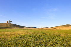Tuscany, Maremma landscape.Tower, field and trees. Stock Photos
