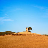 Tuscany, Maremma sunset landscape. Tower and tree Stock Image