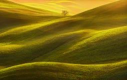 Tuscany panorama, drzewo, toczny wzgórzy, poly, łąkowego i osamotnionego, zdjęcie stock