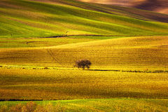 Tuscany panorama, rolling hills, fields, meadow and lonely tree. Royalty Free Stock Image