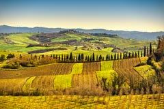 Tuscany panorama, Rolling Hills, träd och gräsplanfält italy arkivfoto