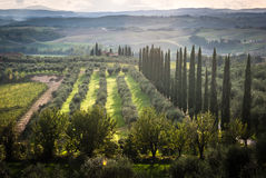 Tuscany. Panoramic view of scenic Tuscany landscape with vineyard in the Chianti region, Tuscany, Italy Stock Photography