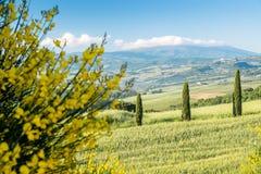 Tuscany panoramiczny krajobraz Zdjęcie Royalty Free