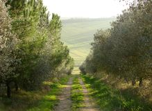 Tuscany, path among trees. A typical natural landscape in Tuscany: a country path among the trees stock photo