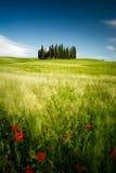 Tuscany pola fotografia royalty free