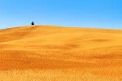 Tuscany pole Obraz Royalty Free