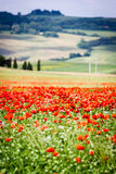 Tuscany, poppies and landscape Royalty Free Stock Photos