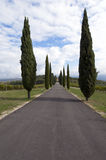 Tuscany road Royalty Free Stock Image