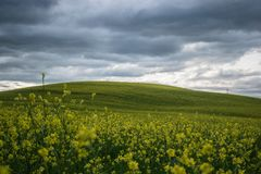Tuscany rural landscaper path countryside italy green blue. Sky royalty free stock photos