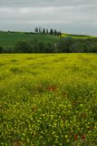 Tuscany rural landscaper path countryside italy green blue yellow. Sky royalty free stock photo