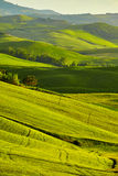Tuscany, rural sunset landscape. Countryside farm Royalty Free Stock Image