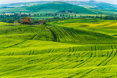 Tuscany, rural sunset landscape. Countryside farm, cypresses trees,. Green field, sun light and cloud. Volterra, Italy, Europe Royalty Free Stock Images