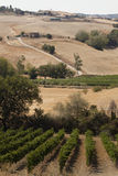 Tuscany's hill Stock Photos