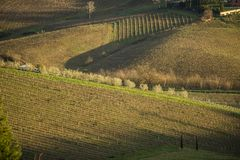 Tuscany`s vineyards and country in winter, at sunset Royalty Free Stock Photos