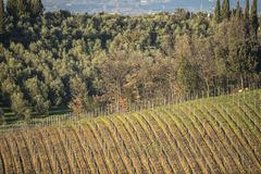 Tuscany`s vineyards and country in winter, at sunset Stock Photo