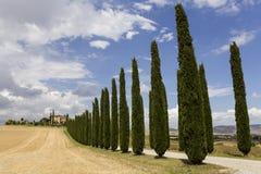 Tuscany sikt med träd Royaltyfri Bild