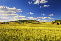 Tuscany spring, Pienza medieval village and wheat. Siena, Italy Stock Image