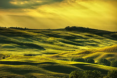 Tuscany spring, rolling hills on sunset. Rural landscape. Green Stock Photography