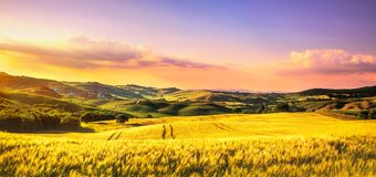 Tuscany spring, rolling hills at sunset. Rural landscape. Whaet, green fields and trees Italy. Tuscany spring, rolling hills at sunset. Volterra rural landscape stock photo
