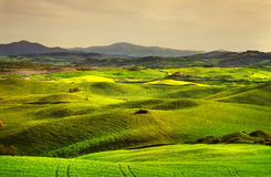 Tuscany spring, rolling hills on sunset. Volterra rural landscap Stock Photography