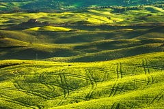 Tuscany spring, rolling hills on sunset. Volterra rural landscap Royalty Free Stock Photos