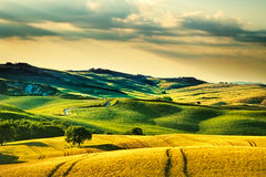 Tuscany spring, rolling hills on sunset. Volterra rural landscape. Green fields and trees Italy royalty free stock photography
