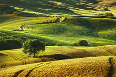 Tuscany spring, rolling hills on sunset. Volterra rural landscape. Green fields and trees Italy royalty free stock image