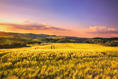 Tuscany spring, rolling hills and wheat on sunset. Siena rural l Stock Images