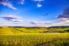 Tuscany spring, Siena countryside wheat fields, small lake and t Stock Photo