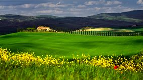 Tuscany in the spring time with green fields and yellow flowers. Farmers house and cypress trees on a sunny day Stock Photography