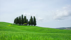 Tuscany, summer landscape with cypress. And the blue sky, timelapse stock footage
