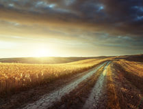 Tuscany sunny road Royalty Free Stock Images