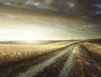 Tuscany sunny road Royalty Free Stock Photography