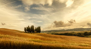 Tuscany sunset  Landscape panorama. Hills, cypress and meadow Stock Photo