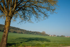 Tuscany, tree shadow on field. Royalty Free Stock Images