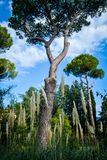 Tuscany trees and grasses Stock Images